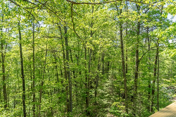 Wooded view at Relaxation Ridge, a 2 bedroom cabin rental located in Pigeon Forge