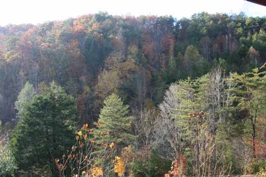 Forest view from Eagle's Loft, a 2-bedroom cabin rental located in Pigeon Forge