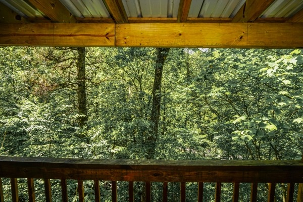 wooded forest view from seclusion a 1 bedroom cabin rental located in gatlinburg