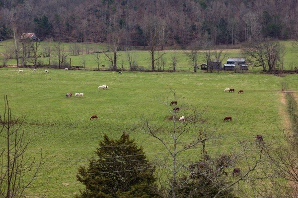 Horses in the nearby meadow at Mountain View Meadows, a 3 bedroom cabin rental located in Pigeon Forge