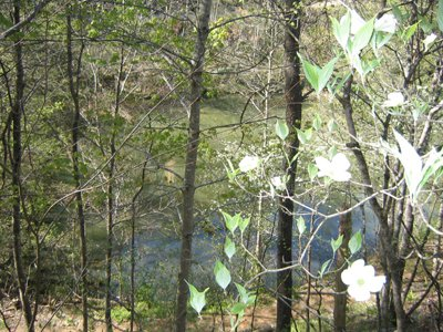 Looking down at the river through dogwood trees at Fishing Bears, a 1-bedroom cabin rental located in Gatlinburg