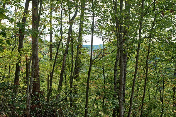 A wooded mountain view at Bird's Eye View, a 2-bedroom cabin rental located in Gatlinburg