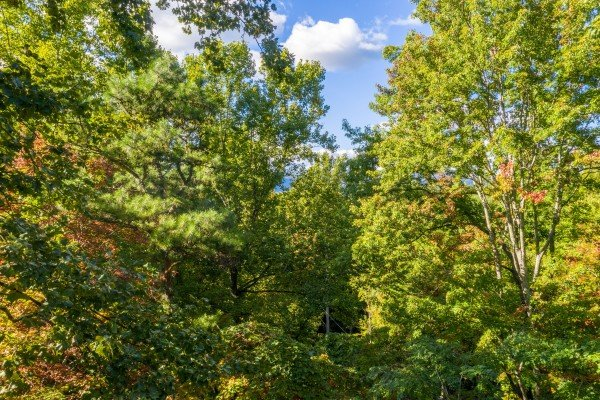 Wooded view at Highland Moose, a 2 bedroom cabin rental located in Pigeon Forge