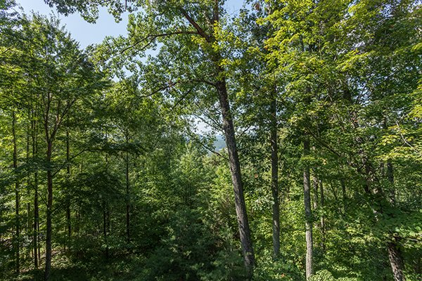 Views into the woods at Friends in High Places, a 4-bedroom cabin rental located in Pigeon Forge
