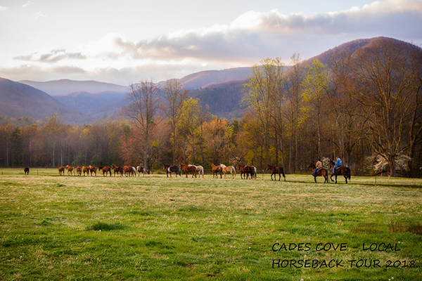 Cades Cove horseback tour near Sweet Serenity, a 2 bedroom cabin rental located in Gatlinburg