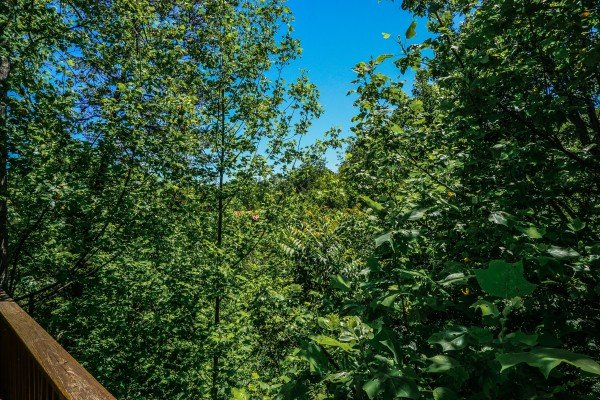 Wooded view from Moonlight in the Boondocks, a 2 bedroom cabin rental located in Gatlinburg