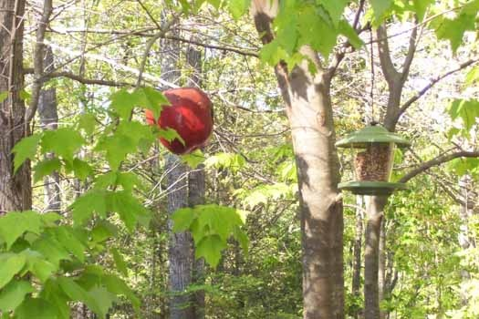 Bird feeders at Mountain Manor, a 1 bedroom cabin rental located in Gatlinburg