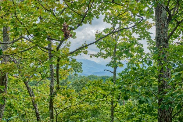 Smoky Mountain view through the trees at Summit View, a 3 bedroom cabin rental located in Gatlinburg