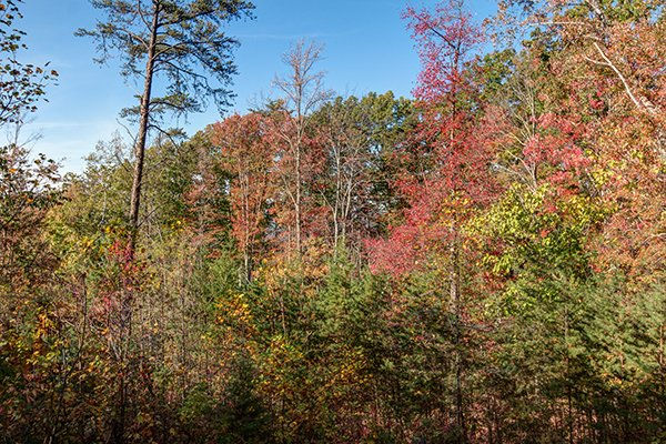 Fall colors on the wooded view at Lincoln Logs, a 2 bedroom cabin rental located in Gatlinburg