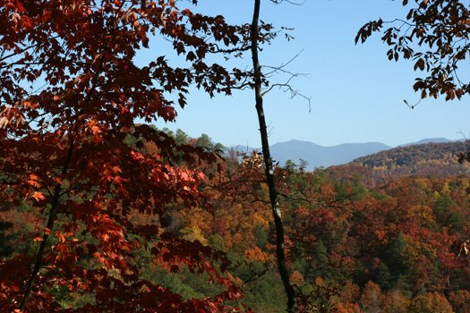 fall foilage view from alpine romance a 2 bedroom cabin rental located in pigeon forge