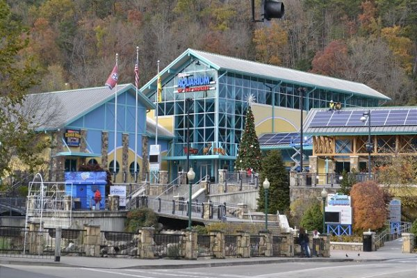 Ripley's Aquarium of the Smokies is near Gatlinburg Movie Mansion, a 5-bedroom cabin rental located in Gatlinburg
