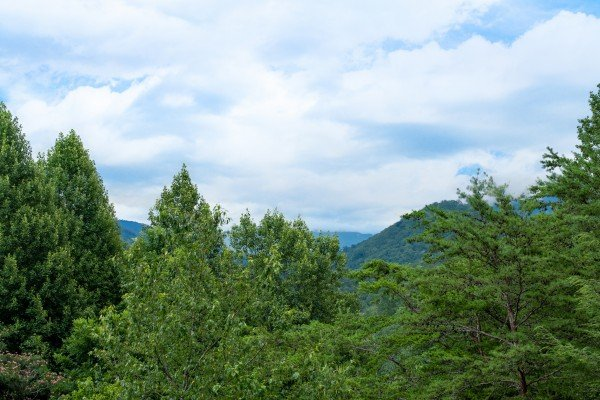 Wooded view at Honey Bear Hideaway, a 1 bedroom cabin rental located in Pigeon Forge