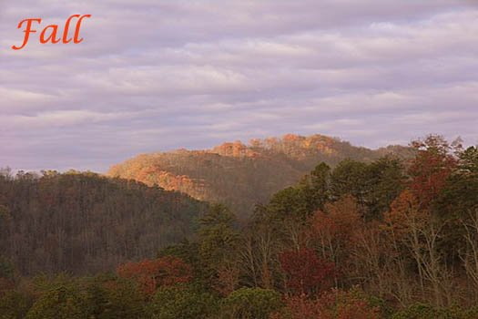 fall foilage in the smoky mountains at r & r hideaway a 1 bedroom cabin rental located in pigeon forge