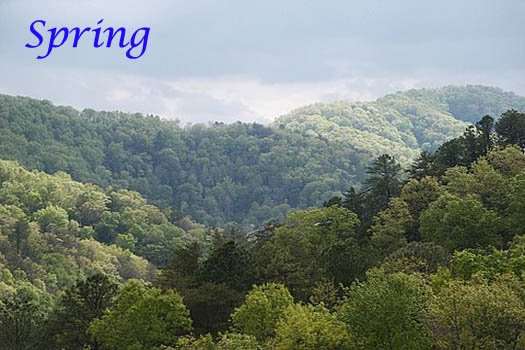springtime view of smoky mountains at r & r hideaway a 1 bedroom cabin rental located in pigeon forge