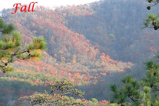 Fall colors in the Smoky Mountains from R & R Hideaway, a 1 bedroom cabin rental located in Pigeon Forge