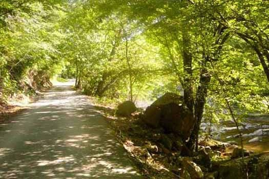 Tree covered driveway up to Dolly's Adorable River Cottage, a 3-bedroom cabin rental located in Pigeon Forge