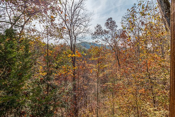 Mountain view behind the trees at Shy Bear, a 2 bedroom cabin rental located in Pigeon Forge