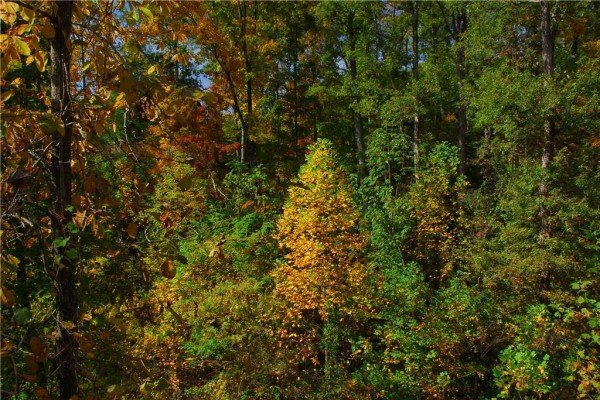 woods view at a beary cozy escape a 1 bedroom cabin rental located in pigeon forge