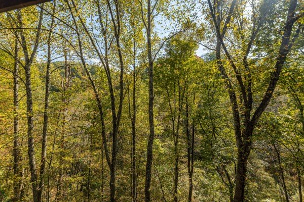 Wooded view at Silver Creek Cabin, a 1 bedroom cabin rental located in Pigeon Forge